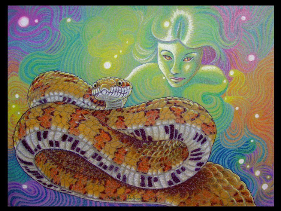 reptiles art snake fantasy color pencil