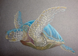 Seaturtle progress photo