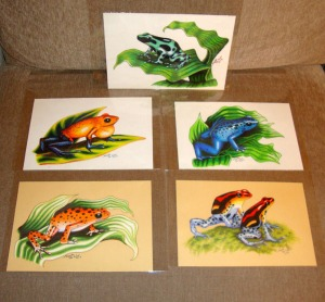 dartfrog collection