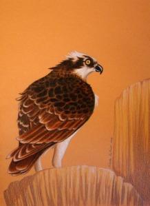 osprey-comm-fin