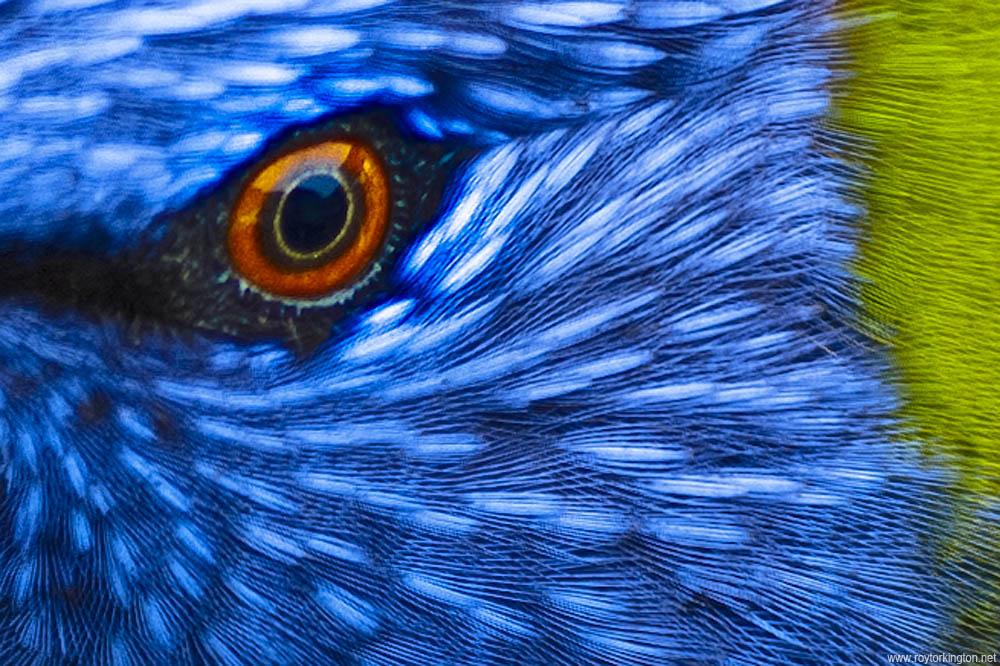 feathers | Art of Angela DeRiso