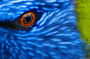 birds-eye