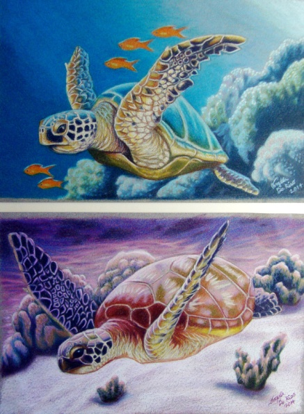 "SEATURTLE SET 8"" x 10"" Both pieces were 8"" x 10"", and made as a matching pair. I really enjoyed doing these, and it's amazing how much detail these turtles have even in smaller pieces. They really do look like they are flying when swimming. I managed to render some simple fish and corals in the background of these two. They were framed and sold to a client just in time for Christmas."