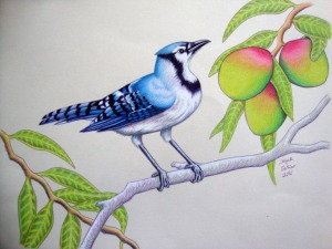 "Blue Jay's Mangoes 11"" x 14"""