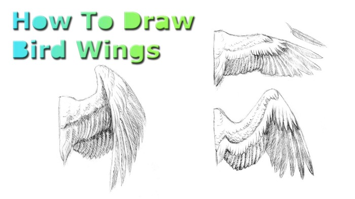 wings-thumb