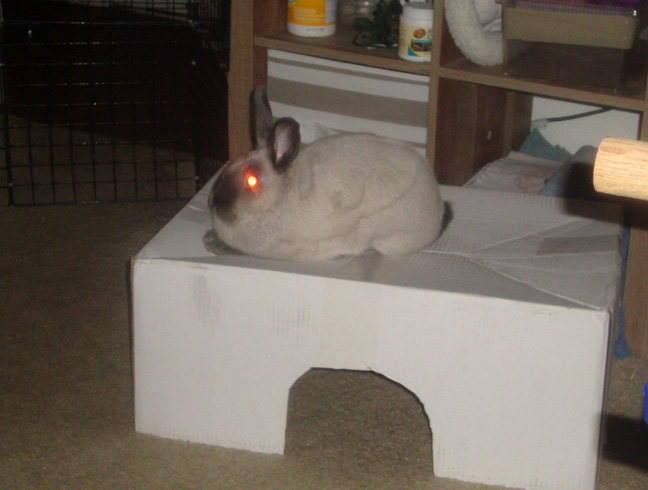 House Rabbit Box